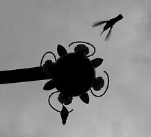 Hummingbirds #1 by Jess Meacham