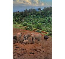 Aberdare National Park Photographic Print