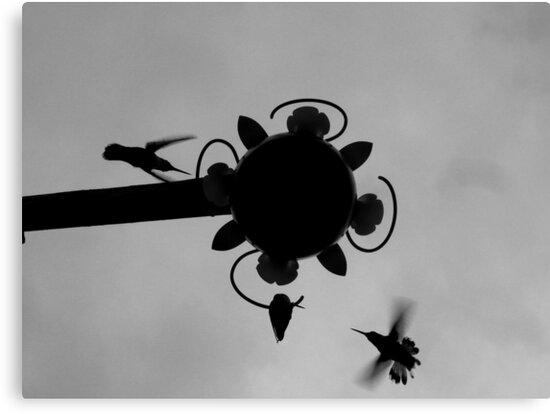 Hummingbirds #2 by Jess Meacham