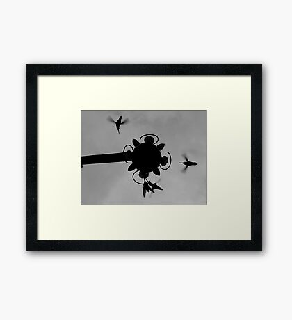 Hummingbirds #3 Framed Print
