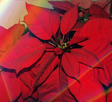 Poinsettias by stained glass windows by ♥⊱ B. Randi Bailey