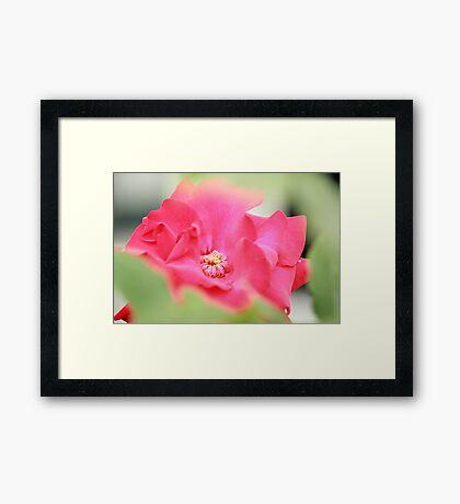 Gorgeous  Framed Print