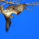 Catch Air by JamesA1