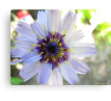 Of violets and purple  Canvas Print