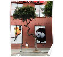 Tree in San Fransico Poster