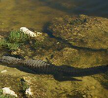 Gator n FLower by Scott Dovey
