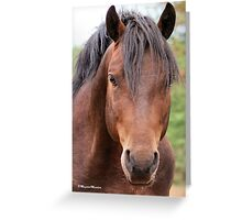 I KNOW I'M GORGEOUS! - EEN VAN ONS BOERPERDE - JOHNY Greeting Card