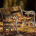 Autumn Serenity by Jennifer Saville