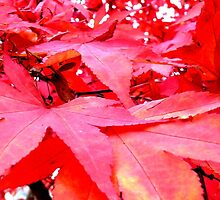 Red Leaves Hereford by Les Haines