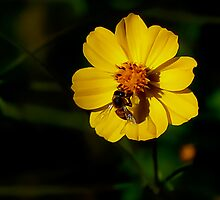 Flower & Bee; productive relationship. by ronsphotos