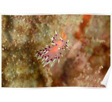 Nudibranch - Flabellina exoptata Poster