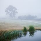 Misty Morn Stroll by Karen Willshaw