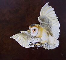 Barn Owl by Beverley Jacobs