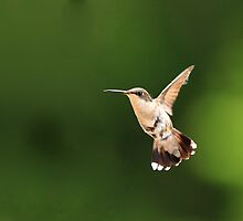 Humming by Steve Small