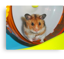 Barney,  the Hamster Canvas Print