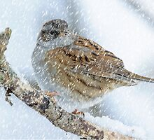 winter bird scene by Andrew Jones
