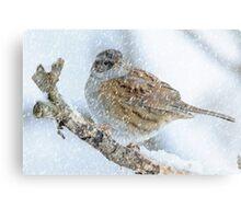 winter bird scene Metal Print