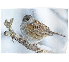winter bird scene Poster
