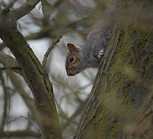 Squirrel of the pit by Crimmy