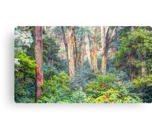 Colours - Laurel Hill, NSW - The HDR Experience Canvas Print