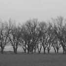 Pecan Trees In Fog by WildestArt