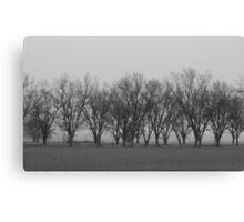 Pecan Trees In Fog Canvas Print
