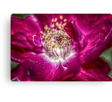 HDR Macro Rose Canvas Print