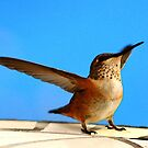 HAPPINESS  IS BEING A HUMMINGBIRD by RoseMarie747