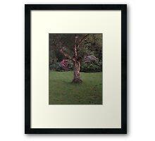 An eye capturing piece of nature  Framed Print