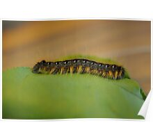 Caterpillar on green leaf resting macro Poster