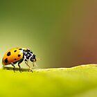 Lady Bug by Joanne Rinaldi