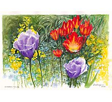 Giverny Tulips in Claude Monet's Garden at Giverny Photographic Print