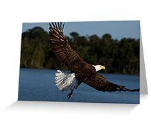 Bald Eagle 001 Greeting Card