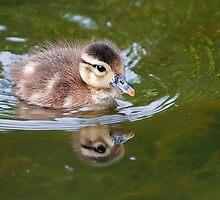 The Not So Ugling Duckling by TeresaB