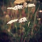 Queen Anne's Lace [2] by FaireUnVoeu