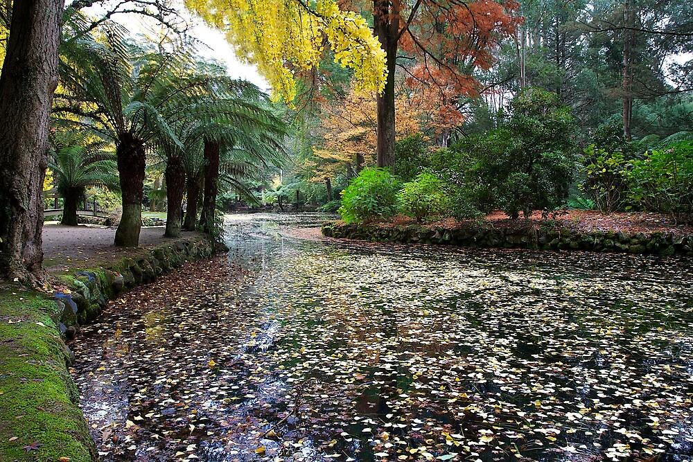 Autumn forest by Joanne Rinaldi
