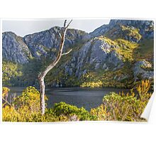 fagus and lake Poster