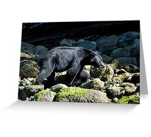 Bear, Vancouver Island Greeting Card
