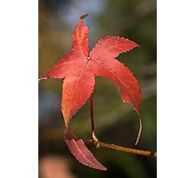 Lone Leaf Photographic Print