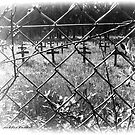 Graveyard Rekem Belgium. by alaskaman53