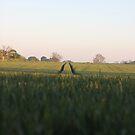 pbbyc - Field Trax by pbbyc