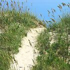 Sea Oats and Dunes, Avon Beach N.C. by AngieDavies