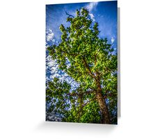 Tree #5 Greeting Card