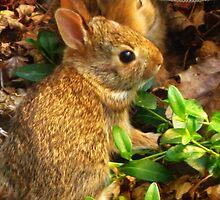 Two Minuscule Bunnies by artwhiz47