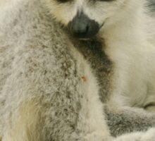 Lemur Portrait Sticker