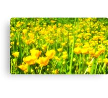 Buttercup Meadow Canvas Print