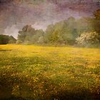 Painted Fields of Yellow by Susan Werby