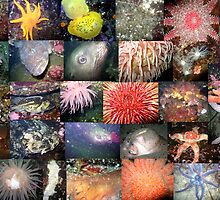 Pacific Northwest Marine Life Collage (landscape) by naturediver