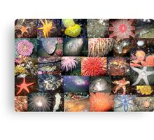 Pacific Northwest Marine Life Collage (landscape) Canvas Print