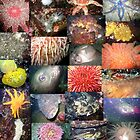 Pacific Northwest Marine Life Collage (portrait) by naturediver